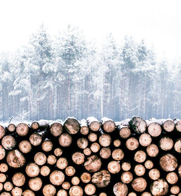 Petits et grands plaisirs de l'hiver