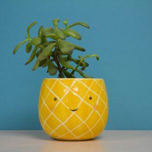 ensemble Théo l'ananas